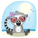 Lemur on the beach Stock Photo