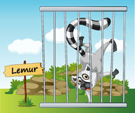 Lemur in cage Royalty Free Stock Photo