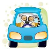 Lemur in a car Stock Photography
