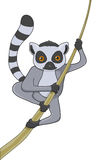 Lemur cartoon character Royalty Free Stock Photos