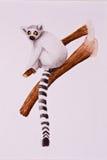 Lemur en la ramificación de árbol Imágenes de archivo libres de regalías