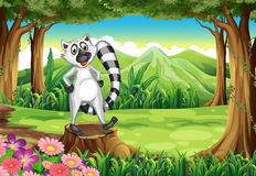 A lemur at the forest standing above the stump Stock Photography