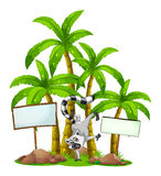 A lemur in front of the palm trees with empty wooden boards Stock Photos