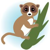 Lemur on green branch on white background. vector Royalty Free Stock Image