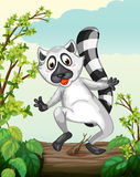 A Lemur in a green nature Stock Photography