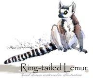 Lemur hand drawn watercolor illustration. Wild nature. tropical animal royalty free illustration