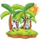 Lemur island Stock Images