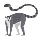 Lemur monkey rare animal vector. Stock Photo