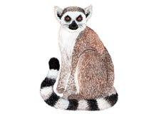 Lemur na białym tle beak dekoracyjnego latającego ilustracyjnego wizerunek swój papierowa kawałka dymówki akwarela Fotografia Royalty Free