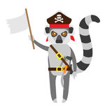 Lemur pirate with white flag Stock Images