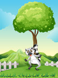 A lemur under the tree Royalty Free Stock Image