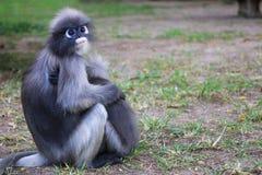 Lemure che si siedono abbracciare sulla terra Immagine Stock Libera da Diritti