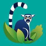 Lemure nell'erba Immagini Stock