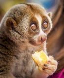 Lemure piacevoli ad un mercato di galleggiamento tailandese fotografie stock