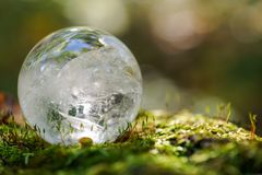 Lemurian Clear Quartz Sphere crystal magical orb on moss, bryophyta and bark, rhytidome in forest stock photos