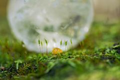 Lemurian Clear Quartz Sphere crystal magical orb on moss, bryophyta and bark, rhytidome in forest stock images