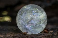 Lemurian Clear Quartz Sphere crystal magical orb on moss, bryophyta and bark, rhytidome in forest royalty free stock image