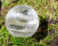 Lemurian gör klar den crystal magiska orben för kvartssfären på mossa, bryophyta och skället, rhytidome i skog arkivfoto