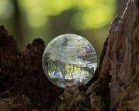 Lemurian Rozjaśnia Kwarcowej sfery krystalicznego magicznego okrąg na mech, bryophyta i barkentynę, rhytidome w lesie fotografia royalty free