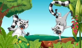 Lemurs in the jungle Royalty Free Stock Image