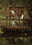 The Lemurs travelers. Funny lemurs floating on the river in the small house on the raft Royalty Free Stock Photography