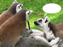 Lemurs who smoke the electronic cigarette Royalty Free Stock Photography