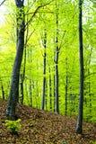 leśna wiosna Fotografia Royalty Free
