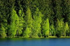 leśna zieleń Zdjęcia Stock