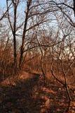 Lenape足迹,印第安人的痕迹,新泽西 免版税库存照片