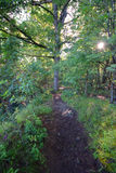Lenape足迹,印第安人的痕迹,新泽西 图库摄影