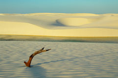 Lencois Maranhensis Стоковое Фото