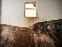 Lendestuk van het paard royalty-vrije stock afbeelding
