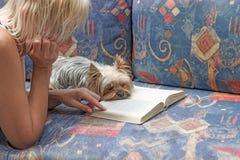 Lendo um livro junto com o yorkshire terrier Fotos de Stock Royalty Free