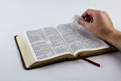 Lendo uma Bíblia no fundo branco Foto de Stock