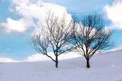 2 lenely дерева Стоковые Изображения