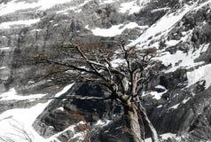 Lengas Torres del Paine Stock Photos
