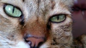 Lengte - kattenzitting op bank stock videobeelden