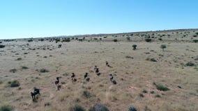 Lengte van de Kalahari stock videobeelden
