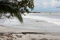 Ocean shoreline showing palm tree ocean waves sand and driftwood. Lengthwise view of the shoreline of Montezuma, Costa Rica. Blue sky, white fluffy clouds, beach Stock Images
