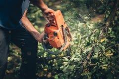 Lenha do corte do trabalhador do lenhador na floresta com uma serra de cadeia profissional Fotos de Stock