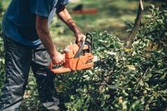 Lenha do corte do trabalhador na floresta com uma serra de cadeia profissional Fotografia de Stock Royalty Free