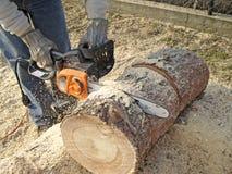 Lenha do Sawing imagem de stock
