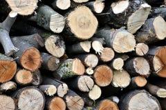 Lenha do Woodpile Fotografia de Stock
