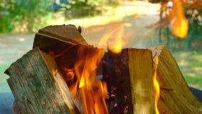 Lenha para carvões ardentes na grade, close-up Os logs de madeira queimam-se na grade, o fogo envolveram a árvore no video estoque