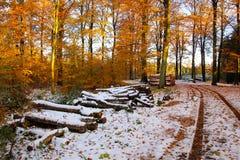 Lenha para o inverno fotos de stock