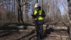 Lenhador que verifica árvores caídas no parque filme