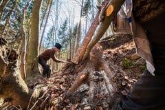 Lenhador superior que tenta tomar para baixo uma árvore vista Imagem de Stock Royalty Free