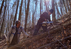 Lenhador superiores que cortam árvores Fotos de Stock Royalty Free