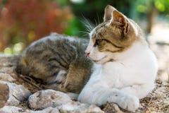 Leniwić się kota Fotografia Royalty Free