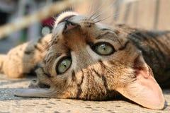 leniwy kot. zdjęcie royalty free